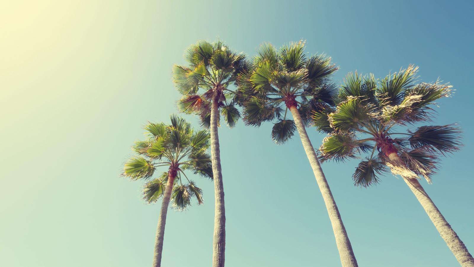 5-California-Cannabis-Retail-Shops-You-Should-Visit.jpg
