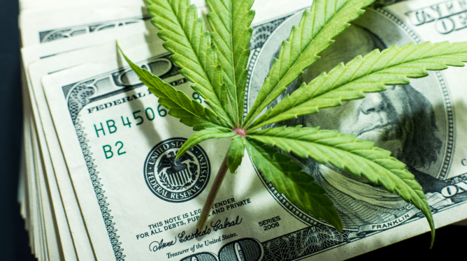 Cannabis Profits