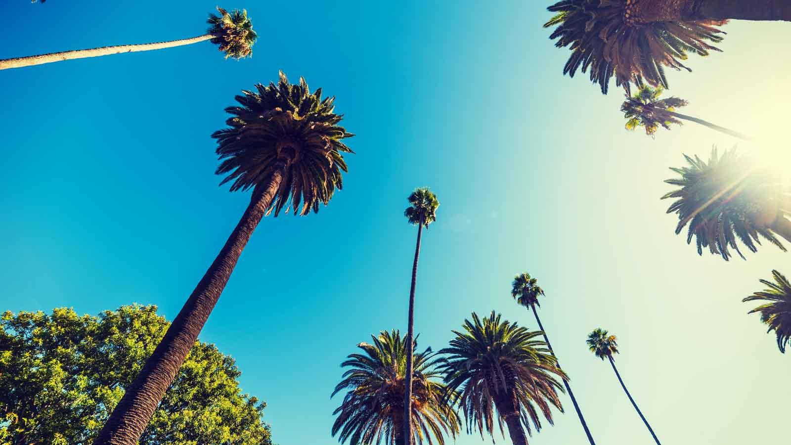 Marketing Cannabis in California
