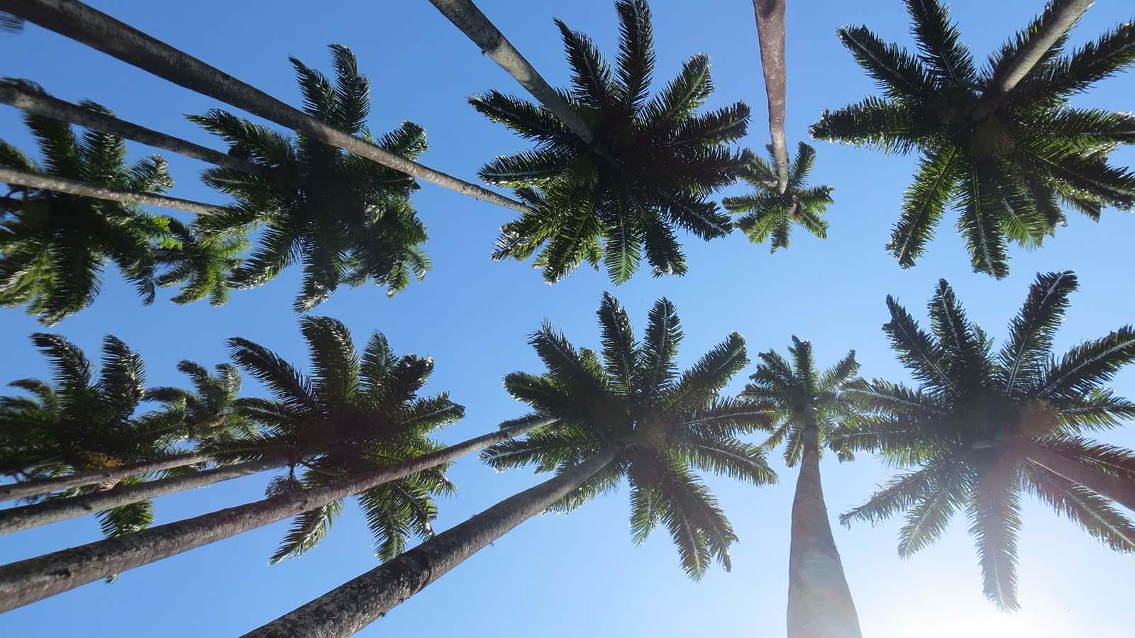 Cova-California-Cannabis-Business-Conference