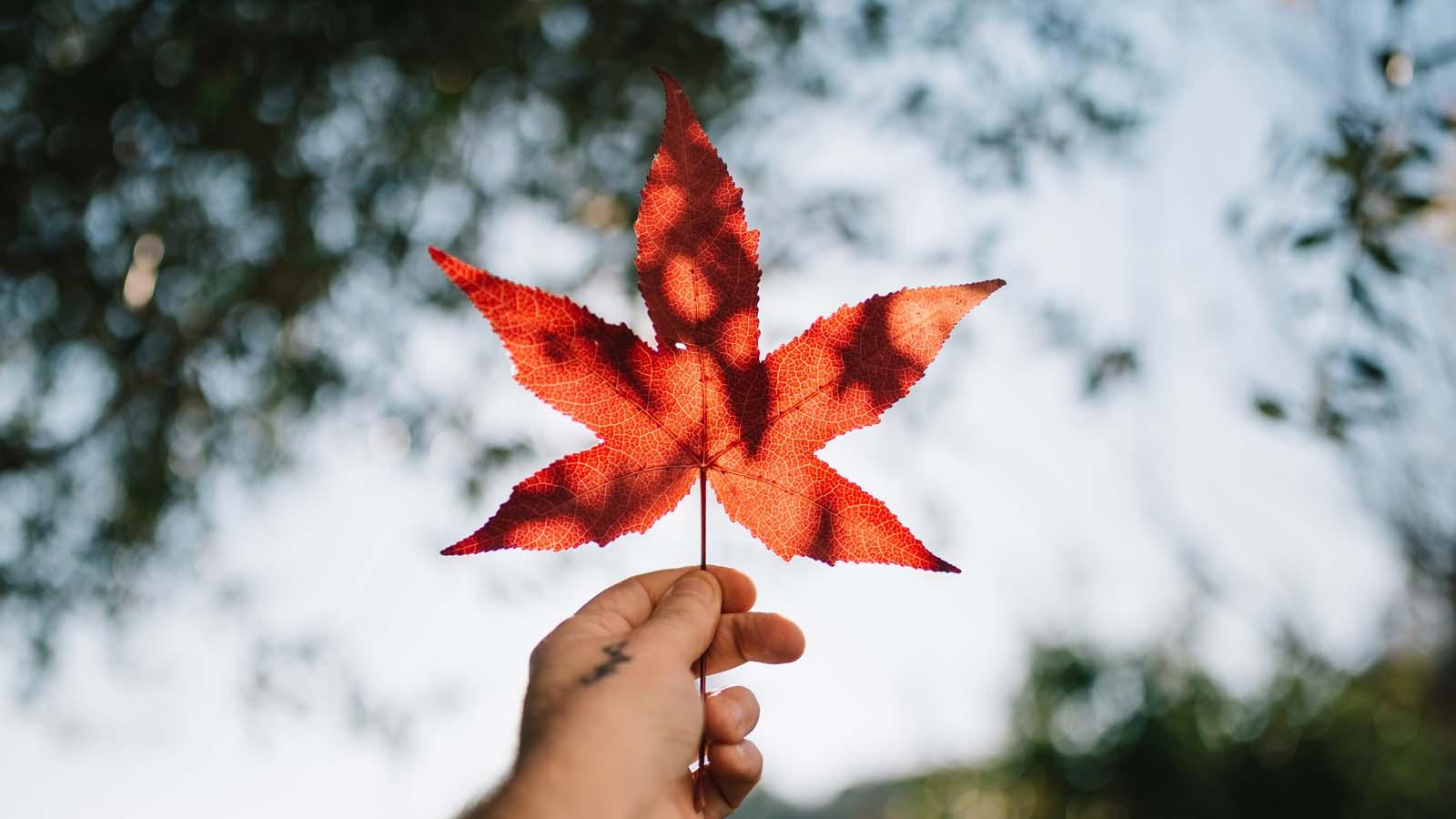 Cannabis Retail in Canada