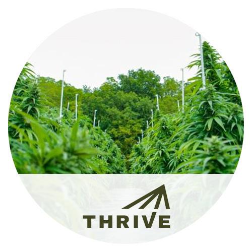 Thrive-Cannabis